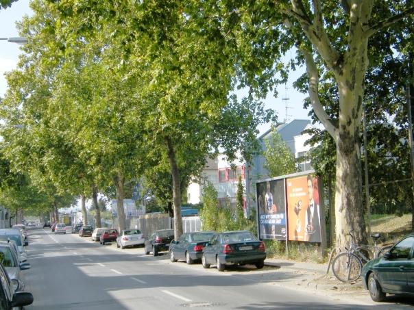 Griesheim, Lärchenstraße